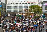 Shibuya Crossing: Lights turn red, cars stop and the people surge in organized chaos