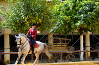 Andalusian Horse Show at the Royal Stables in Cordoba